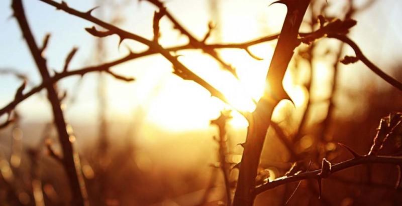 thorns2.jpg